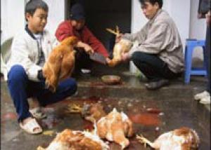 У 13 жителей Индонезии подозревают птичий грипп