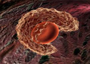Стволовые клетки помогают лечить последствия инсульта