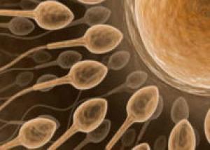 Антидепрессанты портят сперму