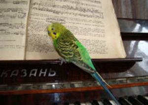Музыка повышает физическую выносливость