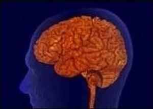 Трансплантация стволовых клеток спасает мозг от радиации