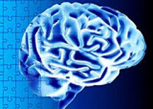 Вновь образованные нейроны помогают `стирать` старые воспоминания