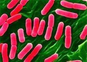 Бактериальные инфекции будут лечить с помощью вирусов