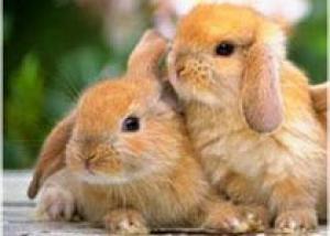 Молоко кроликов превратили в источник человеческого белка