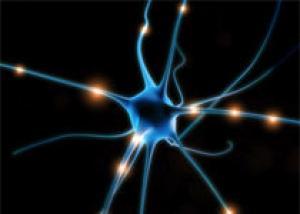 Установлено, что нервные клетки все-таки восстанавливаются