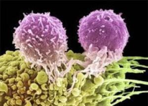 Раковые клетки обладают инстинктом