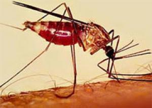 Вакцина против малярии может появиться уже через три года