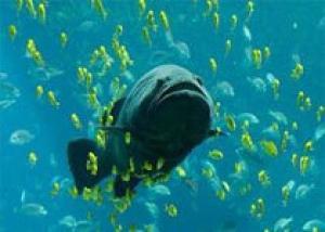 Рыбий жир провозглашен `эликсиром молодости`
