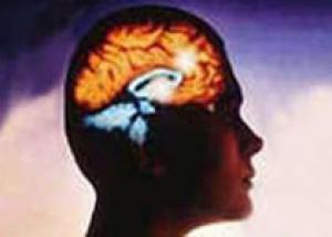 Найден белок очистки краткосрочной памяти