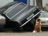 Ваши помощники при парковке автомобиля