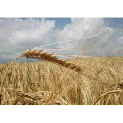 20% аграриев России в ходе посевной 2012 года воспользовались только вступившим в силу законом 260-ФЗ и застраховались от неурожая