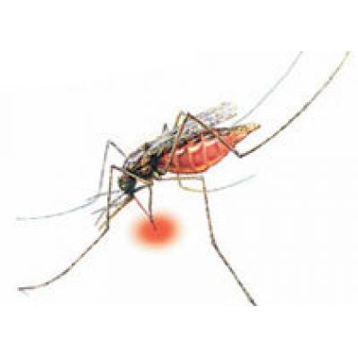 Туроператоры должны предупреждать туристов о риске заразиться опасной инфекцией