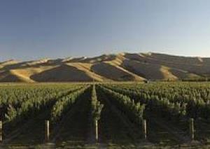 Веллингтон получил главный приз на Best of Wine Tourism Awards