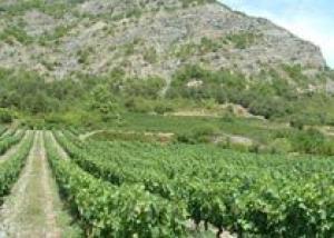Виноградник в Альпах