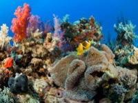 В Бразилии обнаружен новый коралловый риф