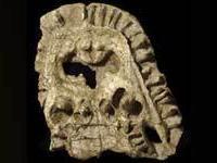 Найден древний лягушкодил с зубами в необычных местах