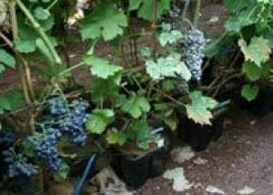 Химия и вино в Аквитании