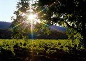 Долина Роны — регион с самым успешным позиционированием вина