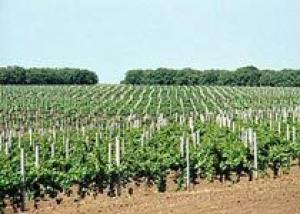 ЕС предлагает расширить право увеличения виноградников до 2%