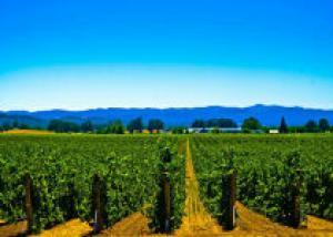 Швеция станет краем виноделов