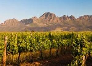 Винодельческие хозяйства Южной Африки ожидают рекордный урожай