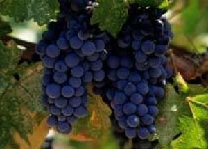 Посещение VINEXPO 2013 ‒ награда лучшим российским виноделам