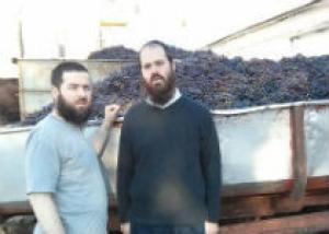 На Кубани будут делать кошерное вино