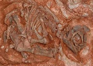 В Африке нашли гнездо динозавров