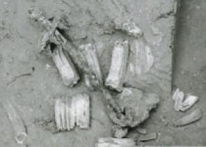Ученые нашли древнейшие в мире металлические удила