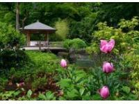 В Краснодаре в парке 30-летия Победы открылся японский сад