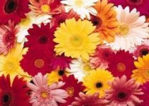 В Самаре состоится фестиваль цветов