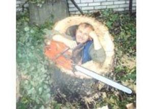 Ландшафтная комиссия в Томске отказала застройщику в сносе деревьев
