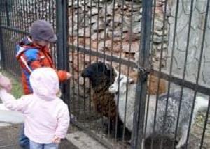 Зоопарк `Роев ручей` готов принять от населения коряги