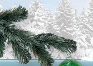 В центре столицы под Новый год появится еловый лес!