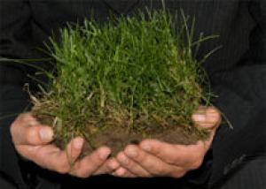 Как помочь почве и растениям на дачном участке?