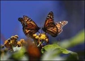 Садовых гномов заменят живые бабочки