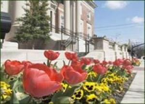 Тюльпаны распустятся среди небоскребов