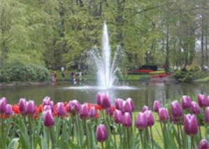 Голландские тюльпаны опоздали на 500 лет