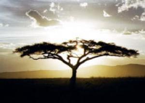 В Эфиопии найдено ранее неизвестное науке дерево