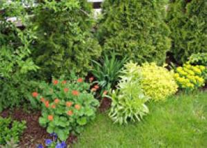 Как сделать озеленение вашего участка идеальным?