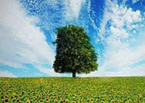 В Никитском ботаническом саду можно посадить свое дерево