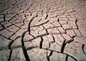 Кенийцы уничтожают национальные парки из-за засухи