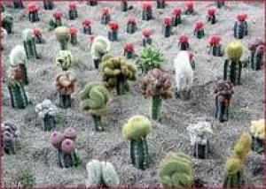 Иран укрепляет позиции в цветочной индустрии