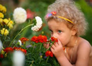 Что такое Сад для фей?