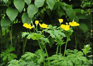 Дикие цветы на пике популярности