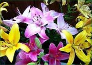 Пакистанские лилии теперь цветут дольше
