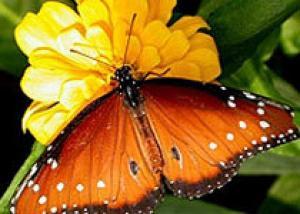Выставка тропических бабочек пройдет в Одессе
