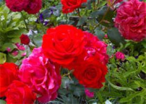 Что нужно знать о свежести цветов