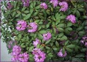 Бингхэмптон утонет в цветах
