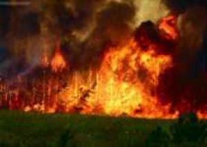 В Приморье лесной пожар погубил сотни редких видов растений